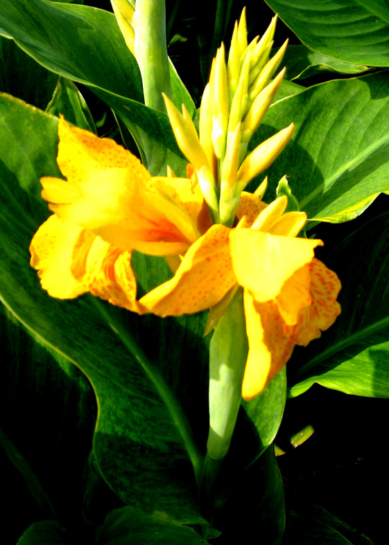 yellow tall flower pictures