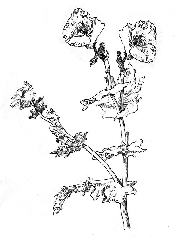 flower sketch black white