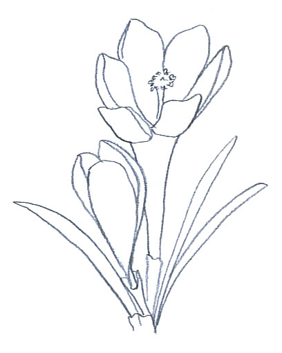Drawings of flowers sketch. Flower sketches