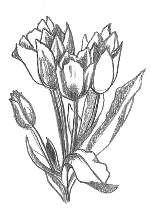 Bunch of flowers tulipa sketch