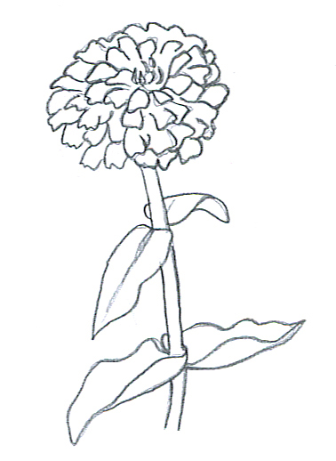 Zinnia Line Drawing : Flower sketches