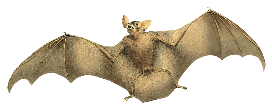 image of flying bat