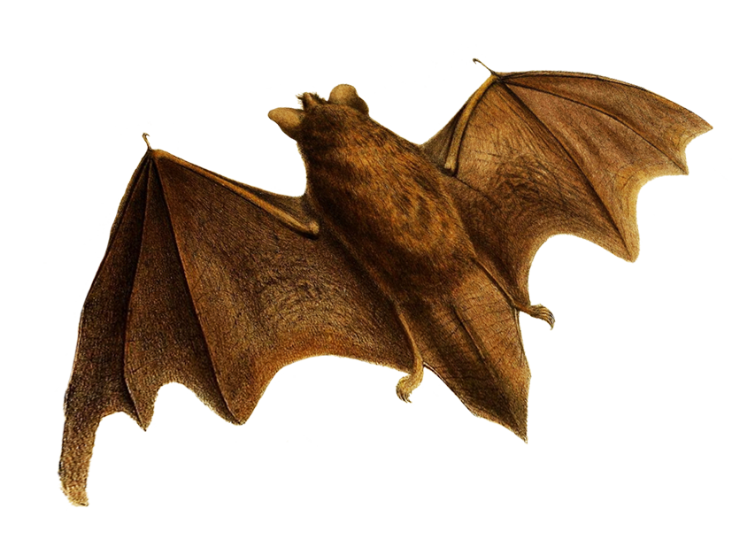 flying bat clipart