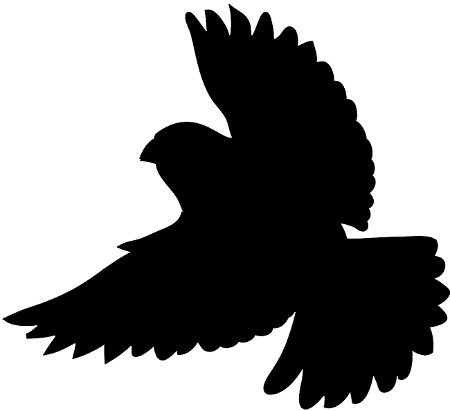 silhouette of flying bird