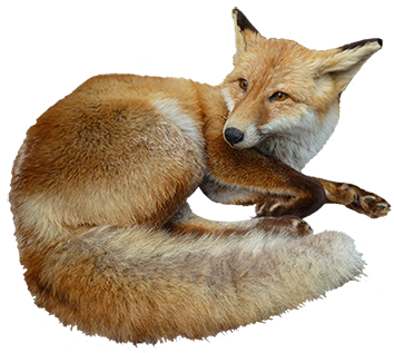 animal-clip-art-fox