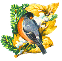 Christmas clip art bullfinch scrap