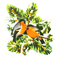 two chaffinches in snow