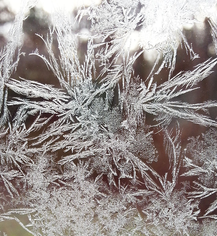 frost flowers on window pane