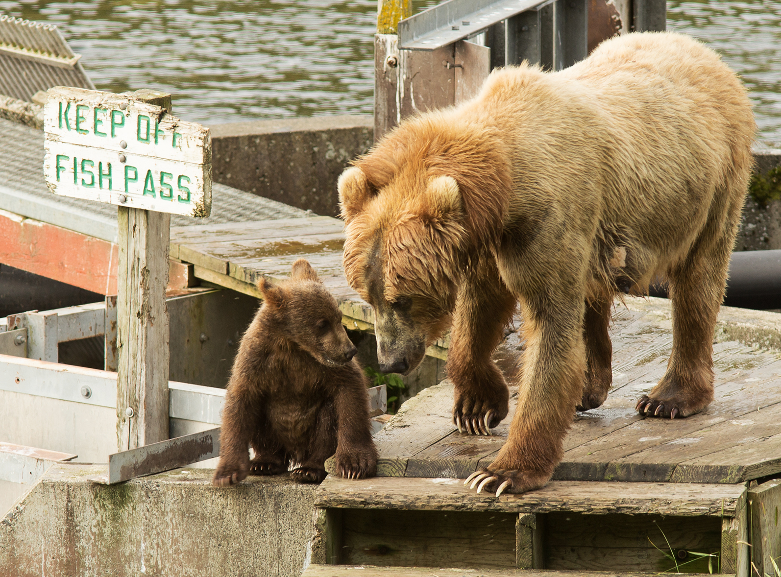 Funny bear picture