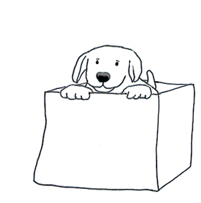 Sketch of puppy in box