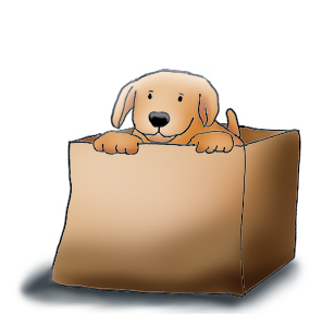 Cute puppy in cardboard box