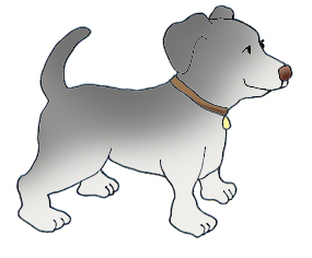 Gray dog with dog collar