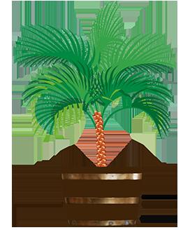 garden palm tree in tub