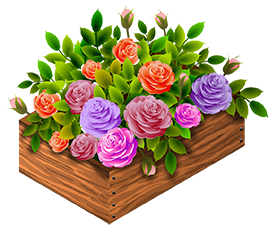 garden roses in a wooden box