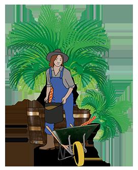 gardening planting palm trees