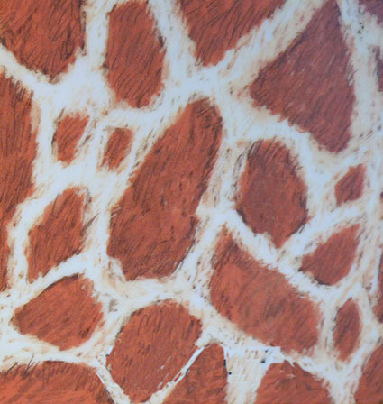 Nubian giraffe skin pattern drawing