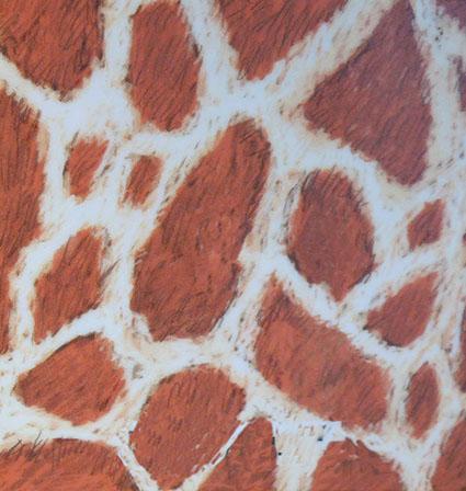 Nubian giraffe skin pattern drawing