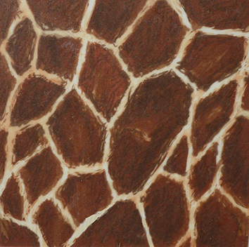 Somali giraffe skin pattern drawing
