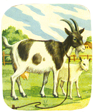 image of goat and young goat