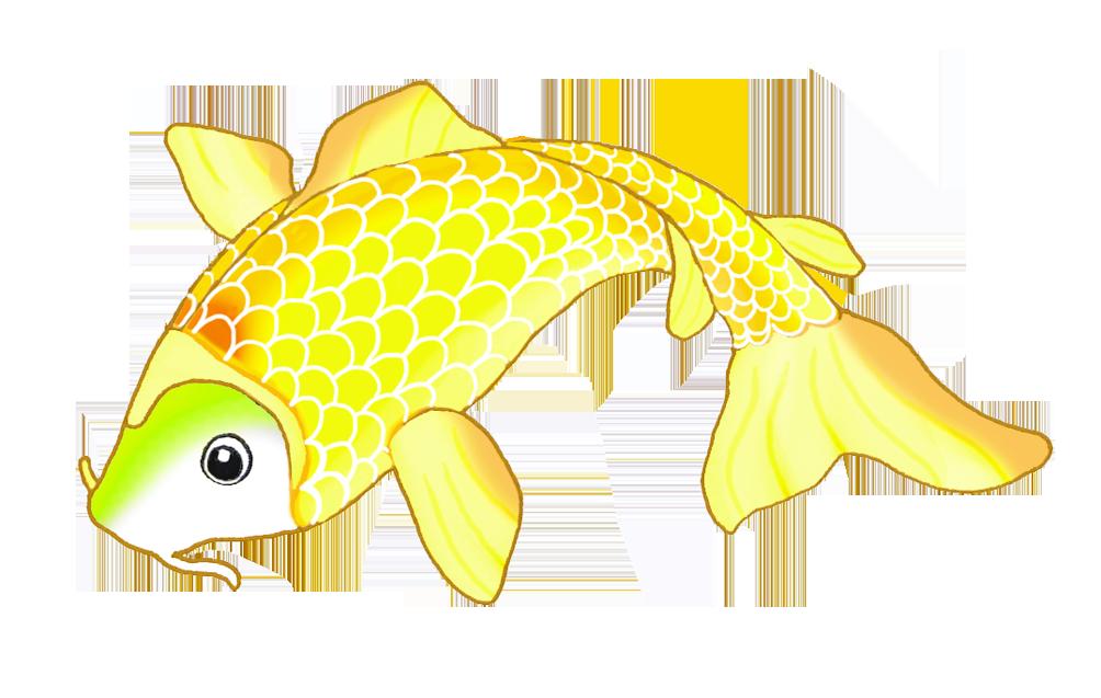 golden koi fish sketch
