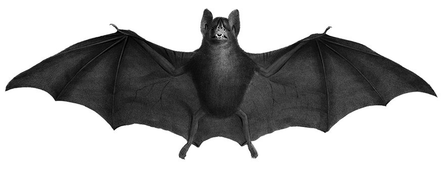 gray drawing of bat