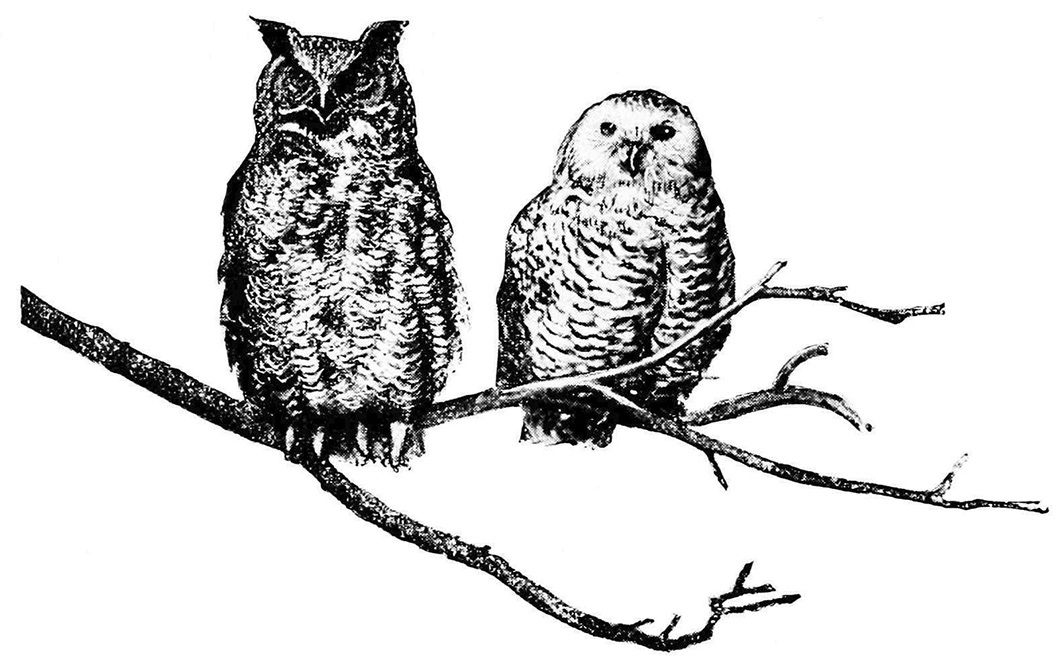 vintage owls on branch