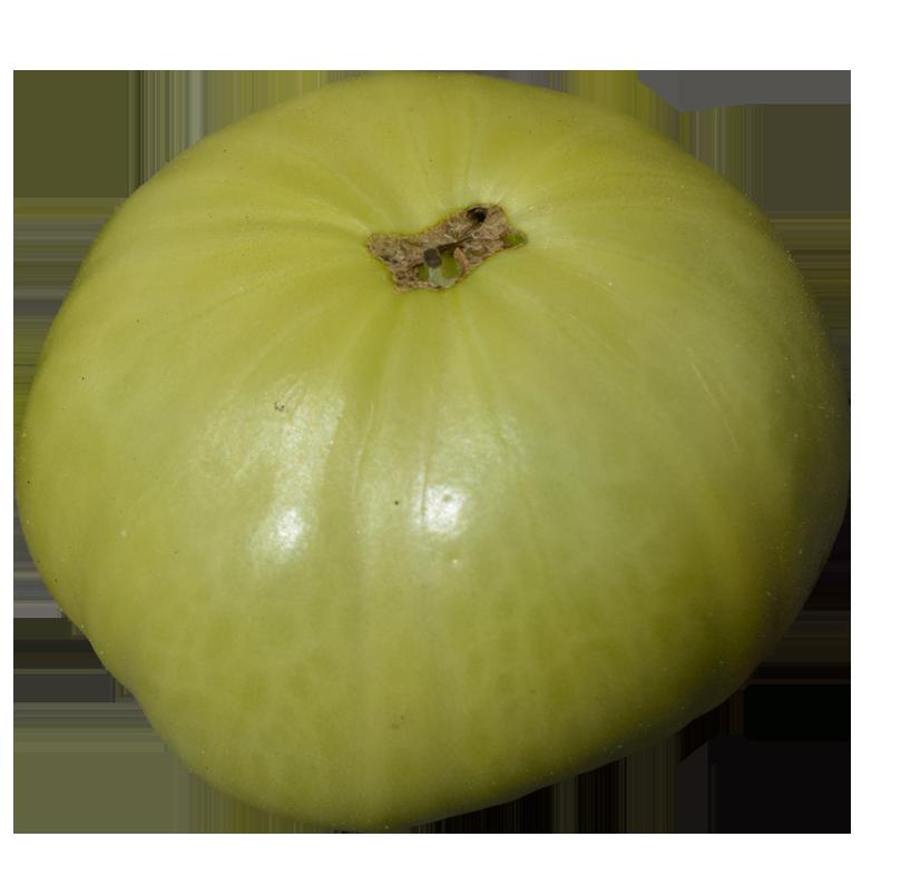 Green tomato clipart