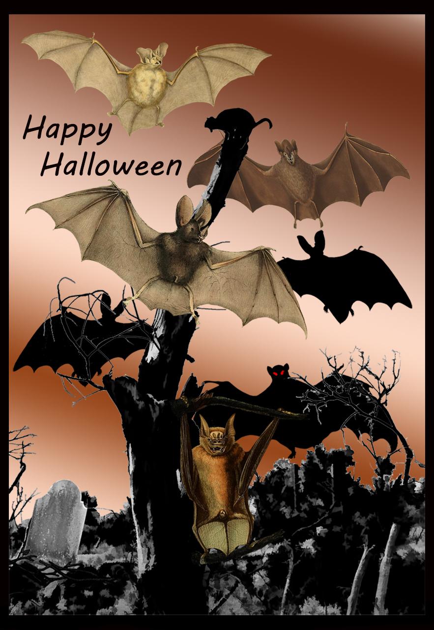 bats-halloween card