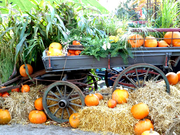 cart with pumpkins for Halloween