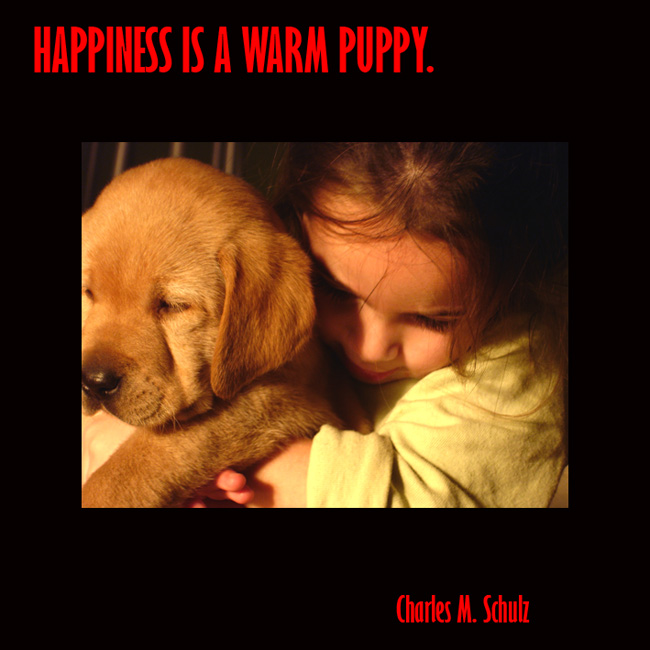 happiness is a warm puppy picture quote