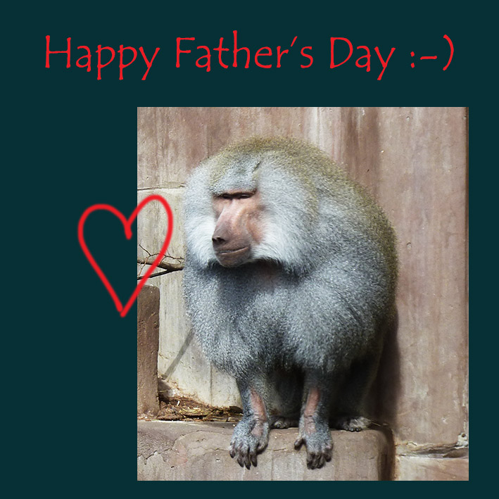 Baboon Father picture greeting
