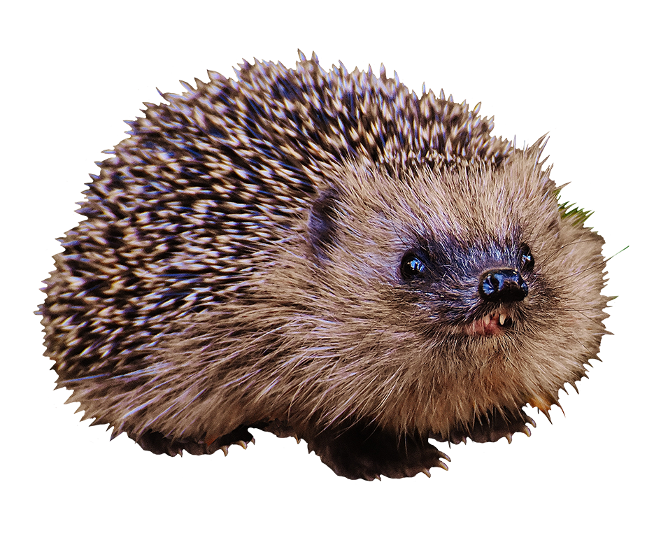 hedgehog child with teeth