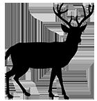 beautiful deer silhouette