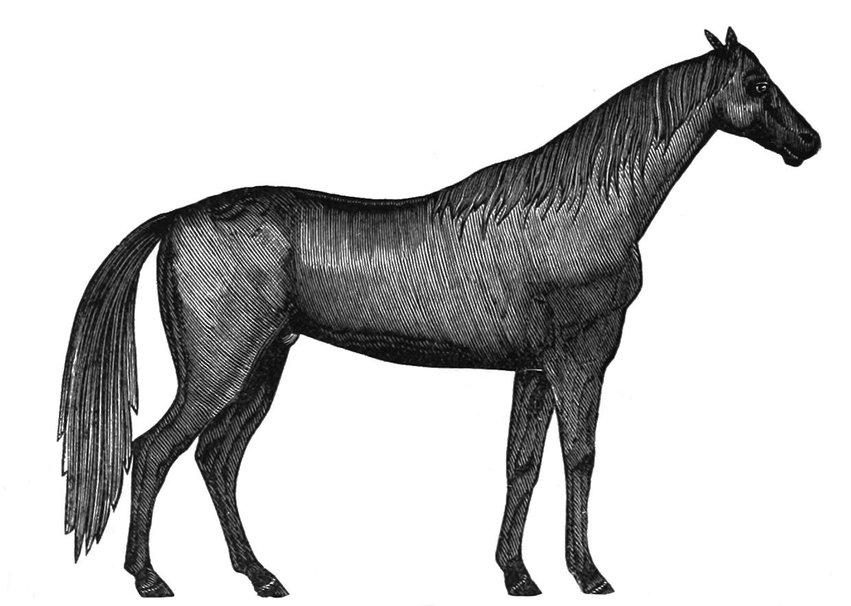 Victorian horse clip art