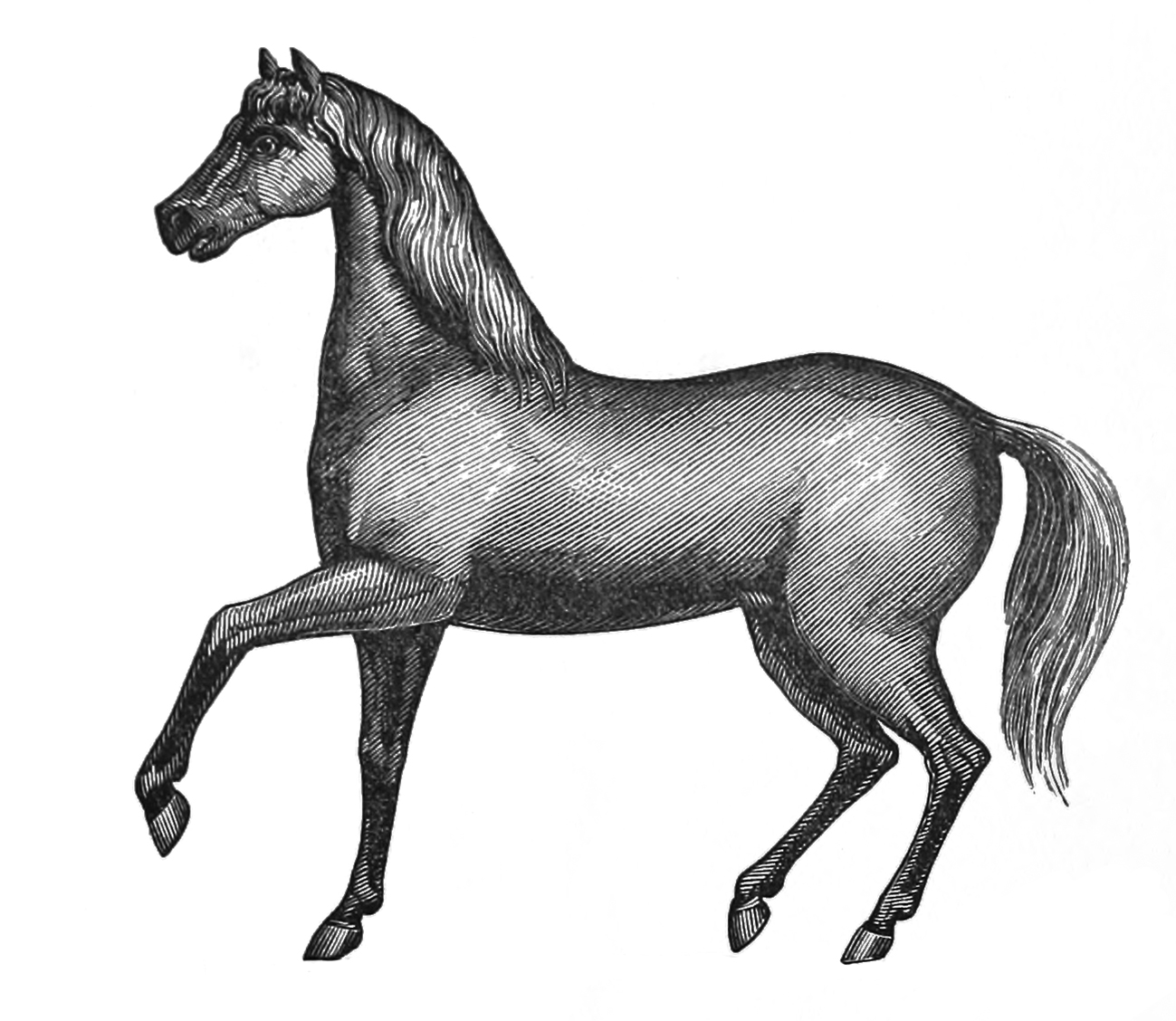 old horse drawing