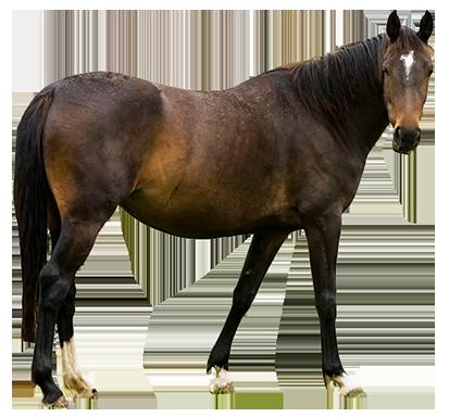 horse clip art sideways