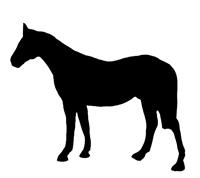 Horse silhouette black