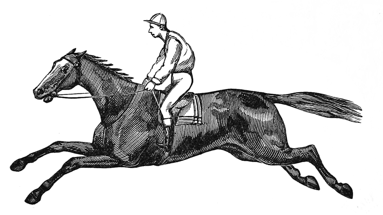 drawing of horse with jockey