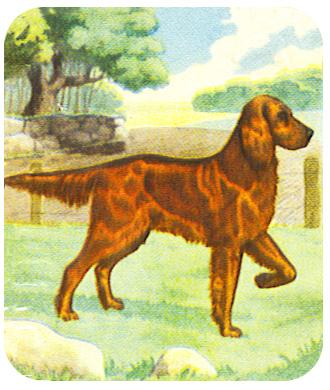 hound clip art