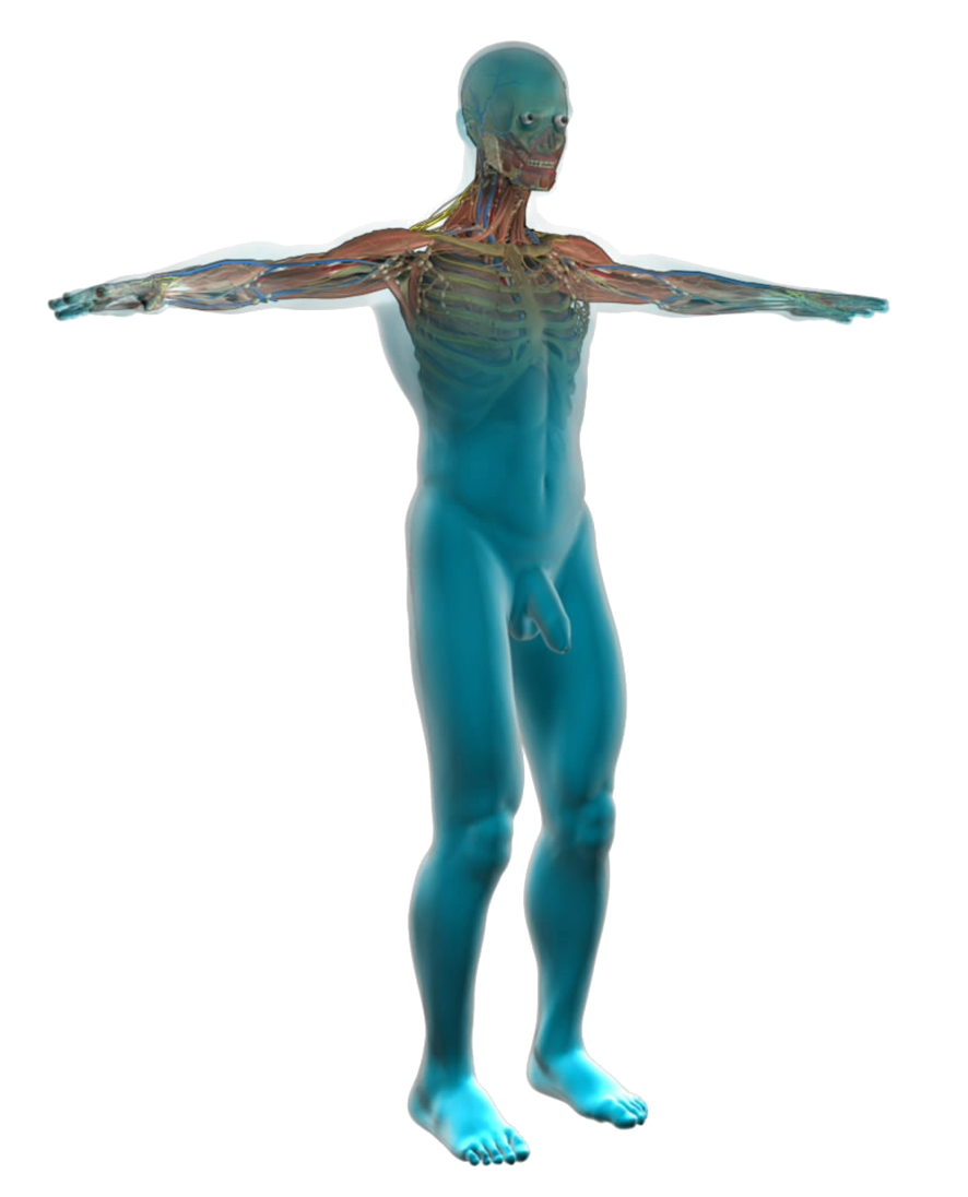 Human Body Diagram - Medical Clipart