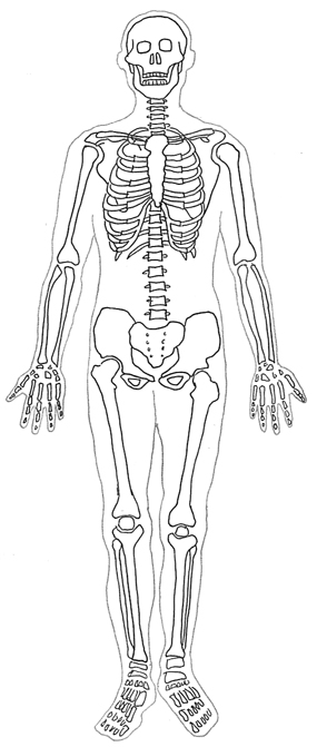 human body diagram sceleton