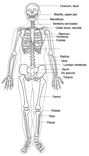 human body diagram designation