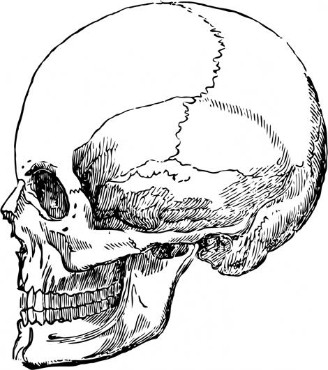 human head skull drawing