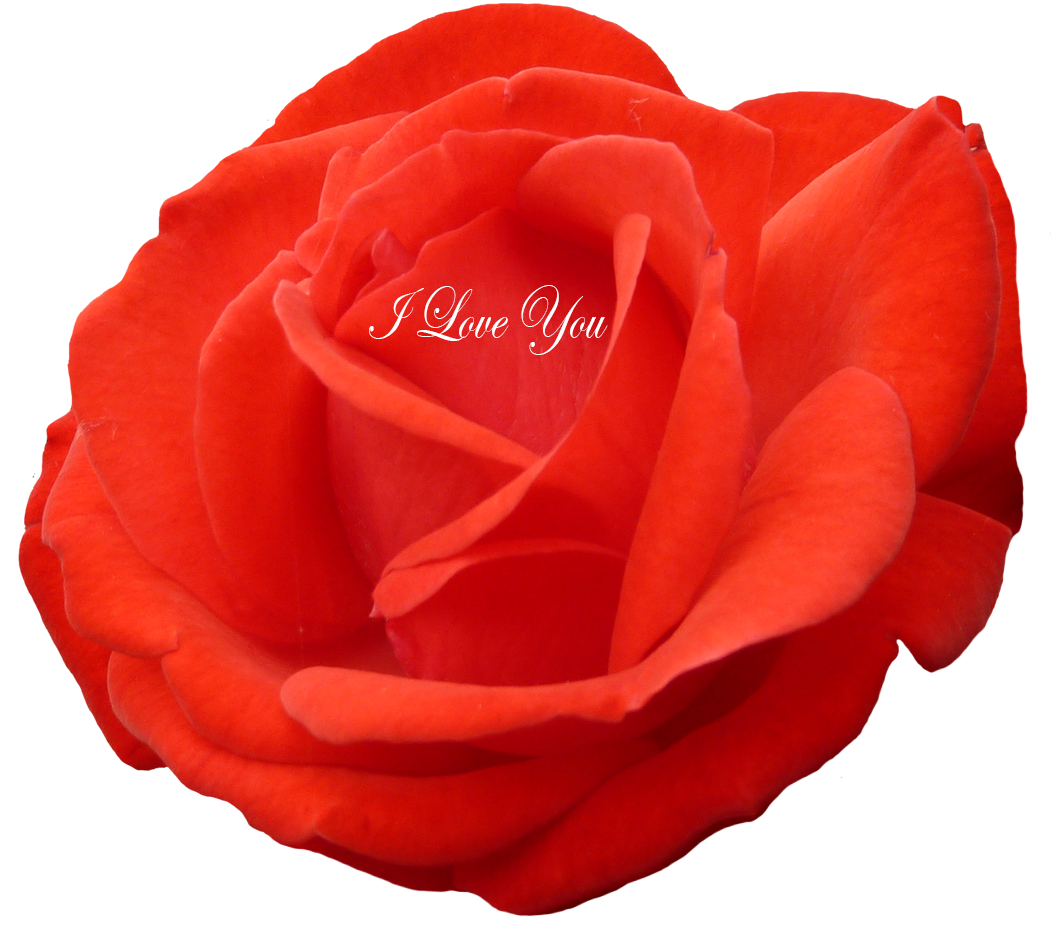 I love you red heart for Valentine