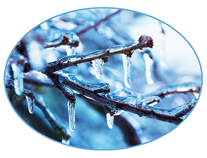 ice on branches