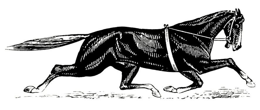 illustration of trotter