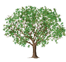 tree clipart link