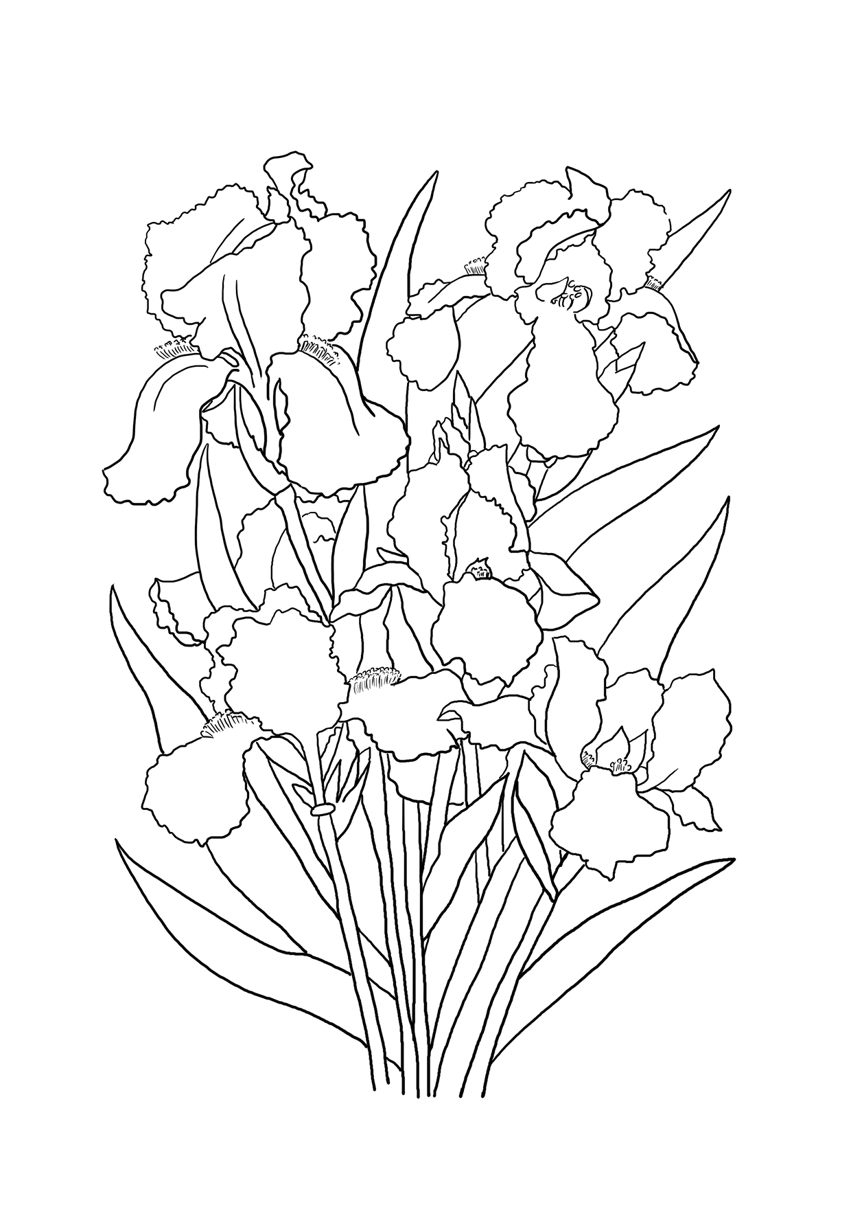 iris bouquet coloring sheet