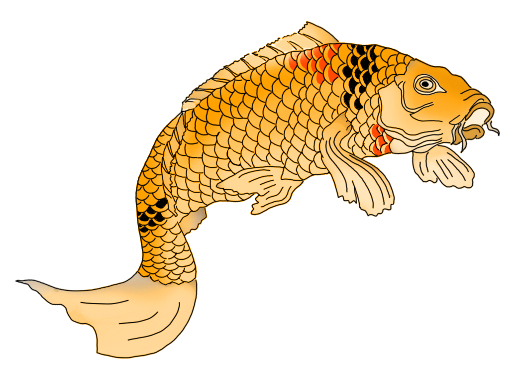 Japanese koi fish drawing orange
