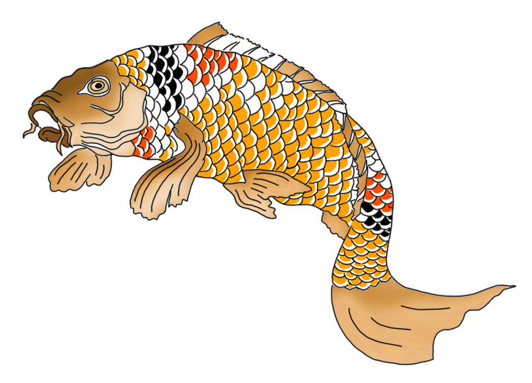 Japanese koi fish orange red black white